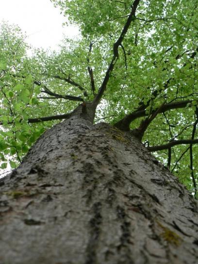 tree-view-408x544